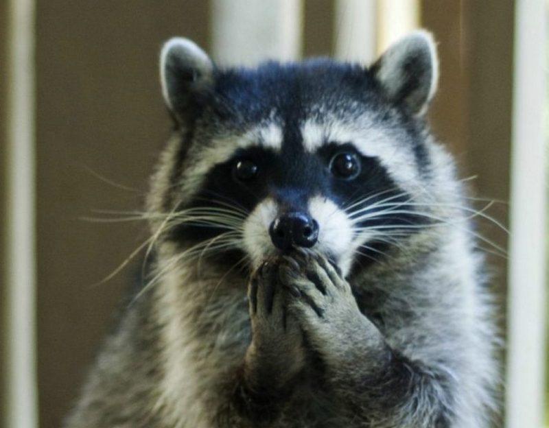 Неповторимые животные, которые научат вас удивляться (ФОТО) - фото 5