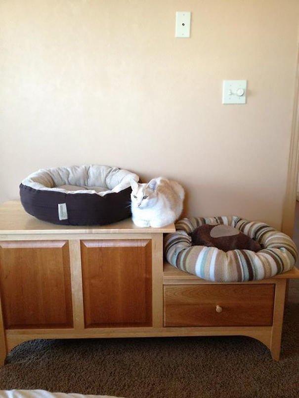 15 фото кошек, которые не оценили подарков от хозяев - фото 8