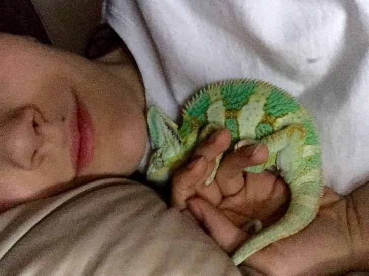 Спят усталые зверушки - фотографии животных, которые заснули в случайных местах  - фото 11