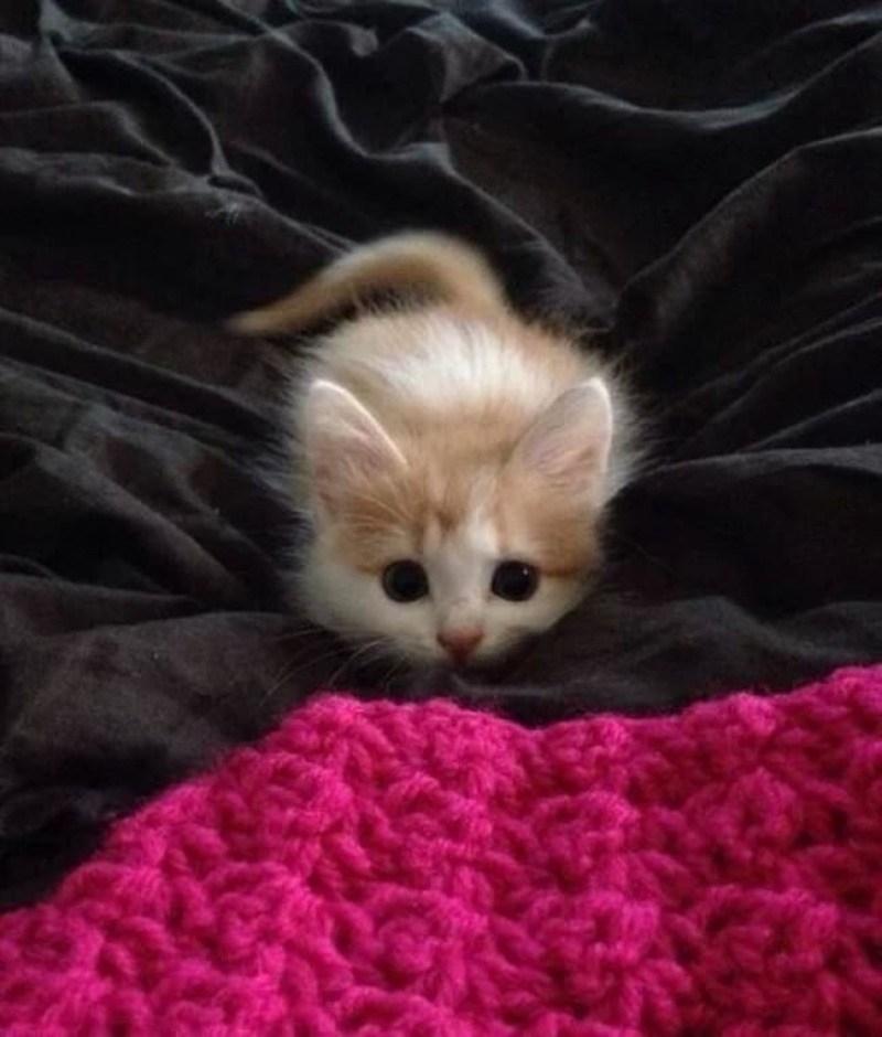 Кошки - правдивые фото, в которых отражена вся суть их натуры  - фото 4