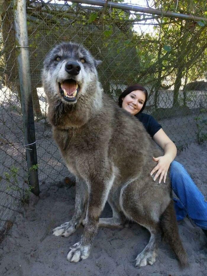 """Впечатляющие фото собак, которые стали """"большими мальчиками"""" - фото 2"""