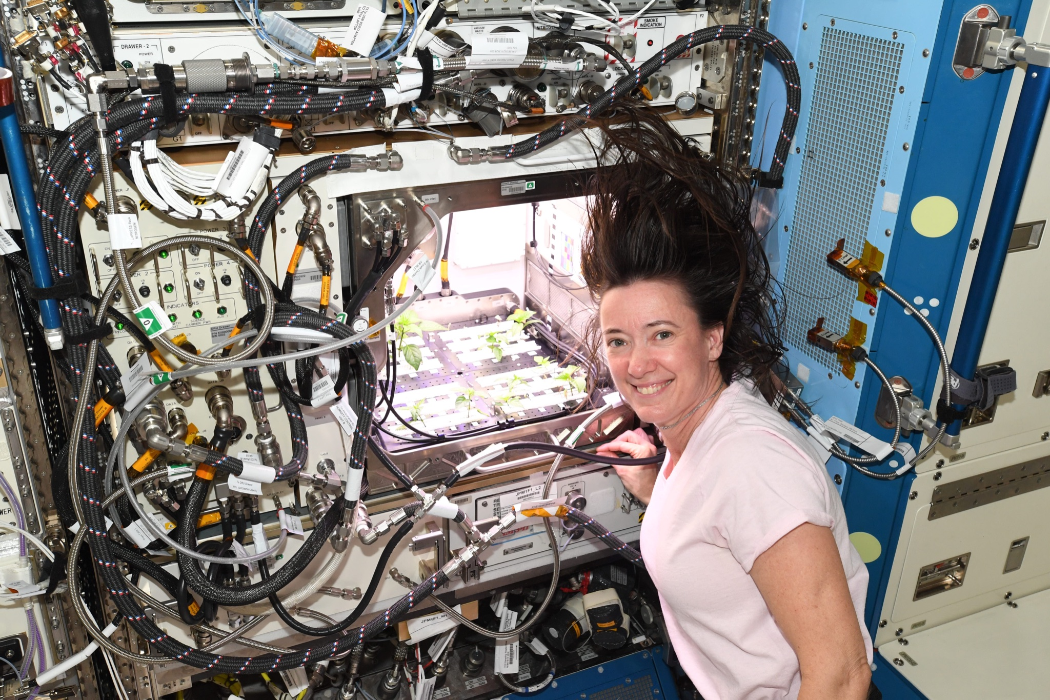 В NASA показали перец, который вырос в космосе - фото 2