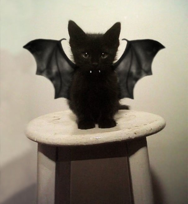 Для підняття настрою в локдаунний вікенд: 17 фото кошенят, мімімішність яких зашкалює - фото 2