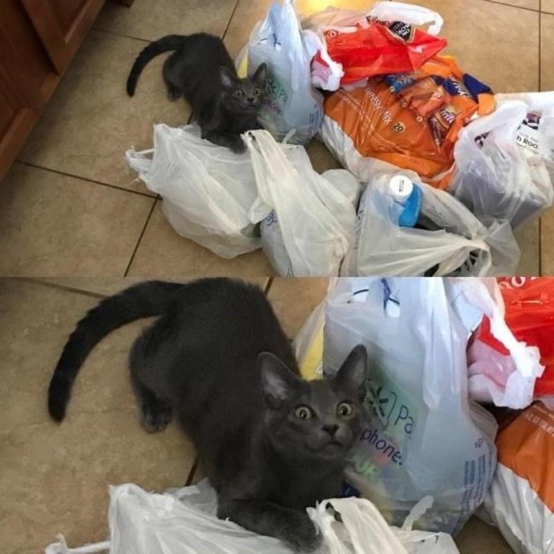 Кошки - правдивые фото, в которых отражена вся суть их натуры  - фото 8