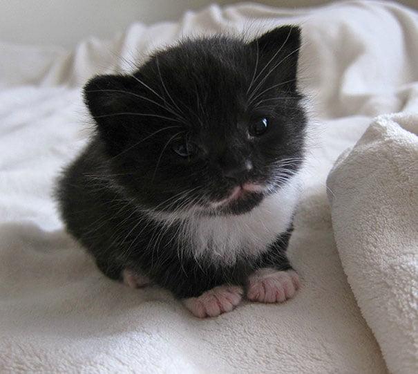 Для підняття настрою в локдаунний вікенд: 17 фото кошенят, мімімішність яких зашкалює - фото 13