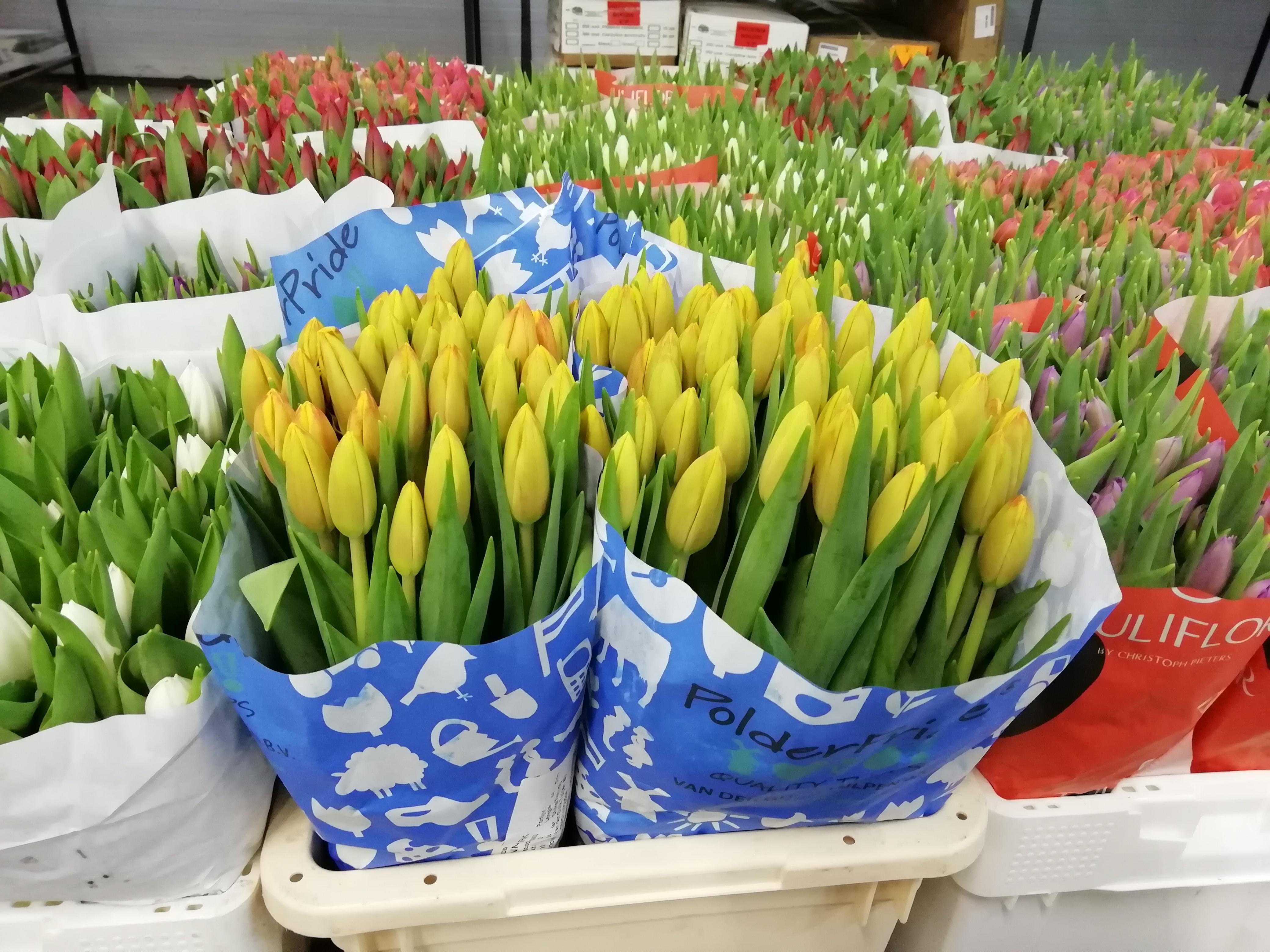 Мошенничество накануне 8 марта: женщина заплатила 13 тысяч гривен за несуществующие тюльпаны