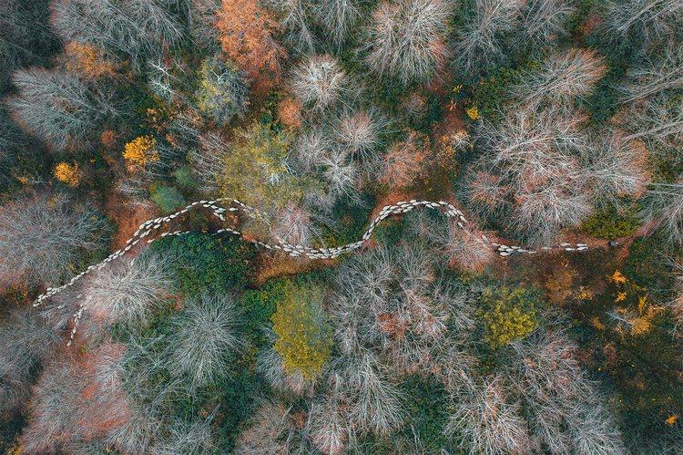 Это надо видеть: лучшие фото 2020 года, сделанные с воздуха - фото 8