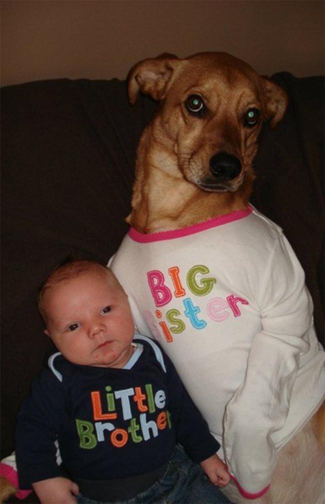 Порция позитива: собаки, которые явно возомнили себя человеком (фото) - фото 4