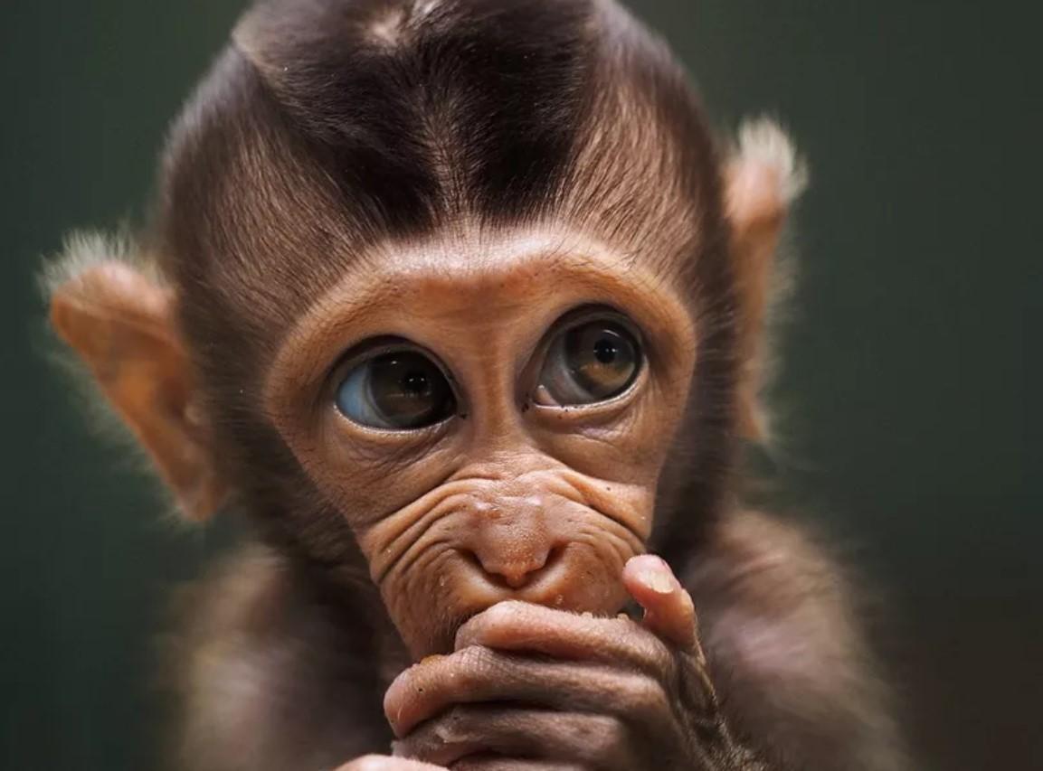Лучшие снимки дикой природы от социальной сети Agora - фото 5