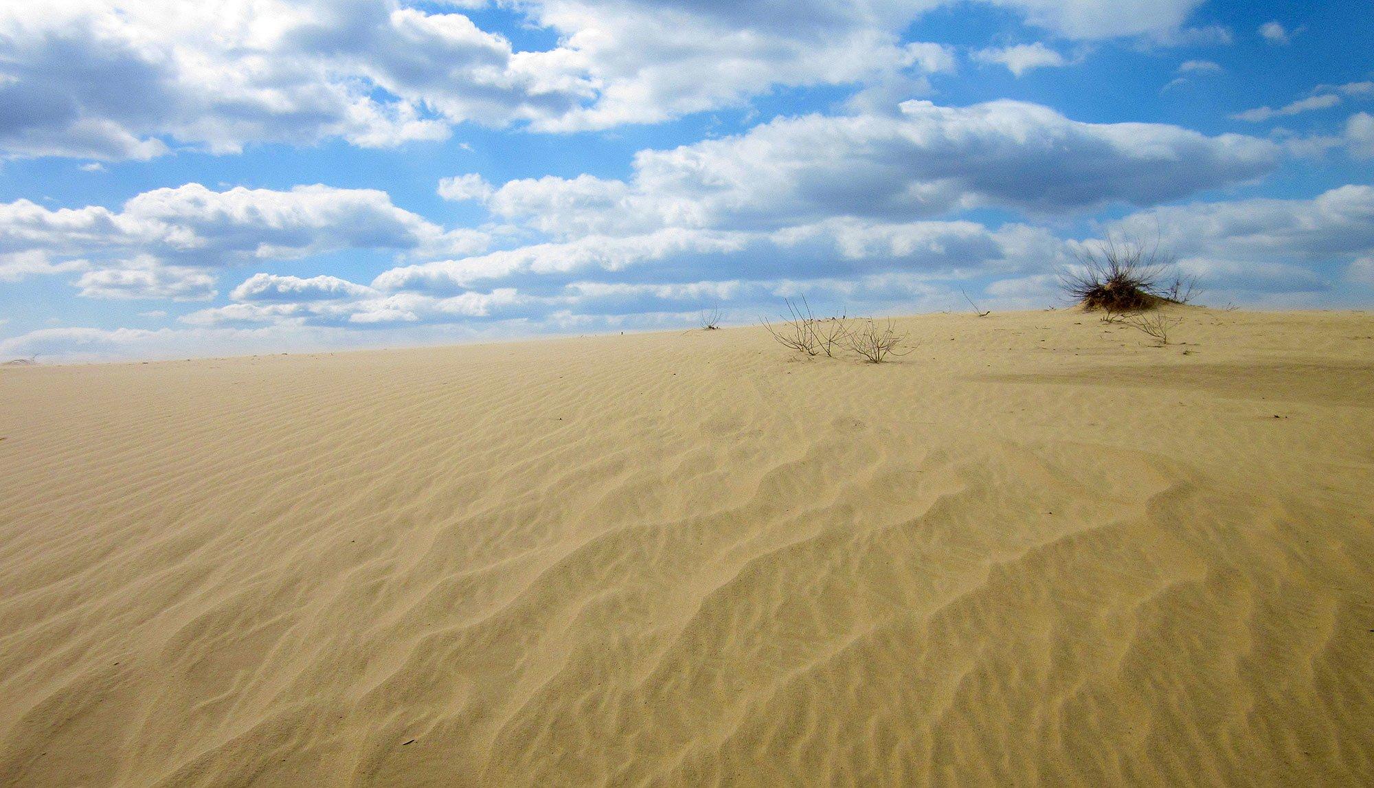 Часть Украины может превратиться в пустыню: ученый рассказал об изменении климата