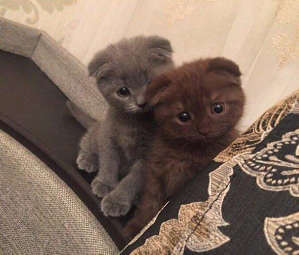 Для підняття настрою в локдаунний вікенд: 17 фото кошенят, мімімішність яких зашкалює - фото 5