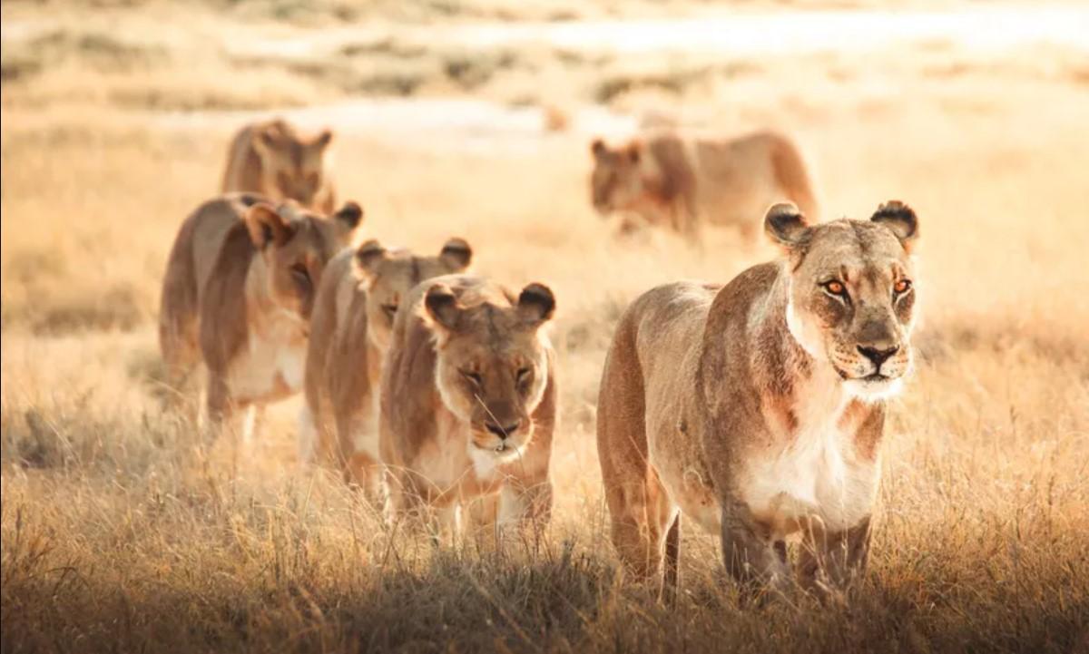 Лучшие снимки дикой природы от социальной сети Agora - фото 4