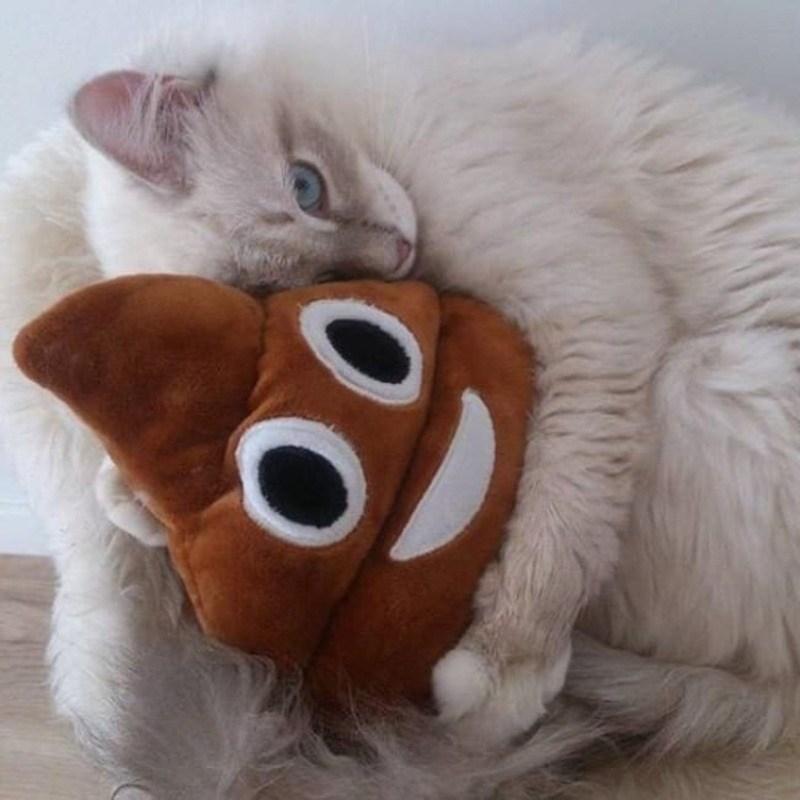 Кошки - правдивые фото, в которых отражена вся суть их натуры  - фото 23