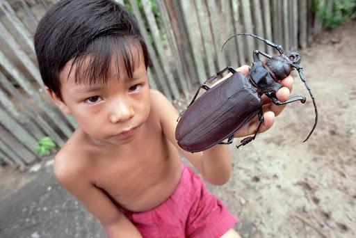 Топ комах-гігантів з усього світу - фото 7