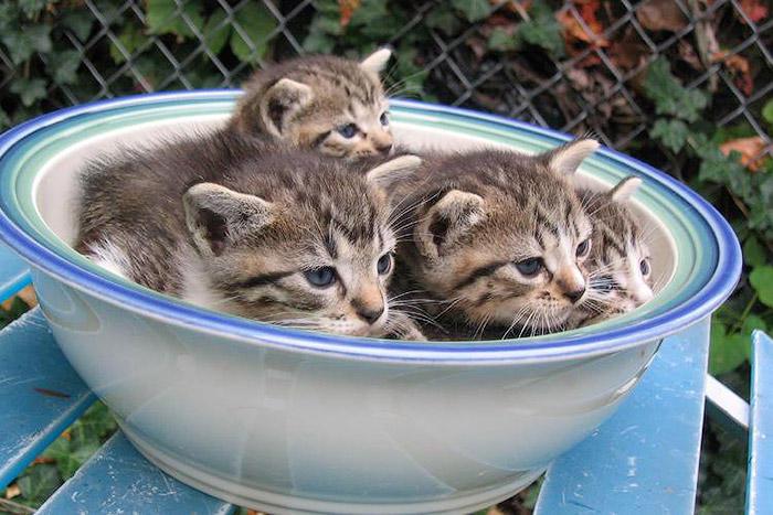 Кішки - це рідини, і цьому є докази - фото 18