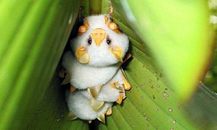 Пять необычных животных, о которых вы вряд ли слышали - фото 5