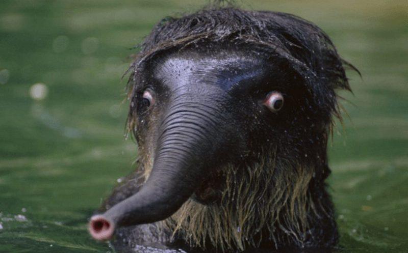 Неповторимые животные, которые научат вас удивляться (ФОТО) - фото 3