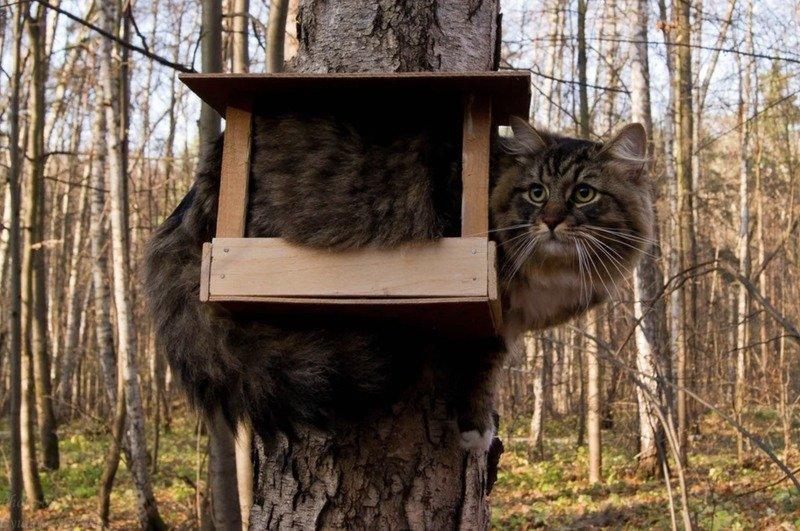 Кішки - це рідини, і цьому є докази - фото 6