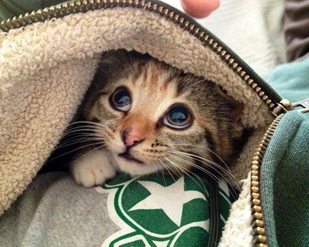 Для підняття настрою в локдаунний вікенд: 17 фото кошенят, мімімішність яких зашкалює - фото 14