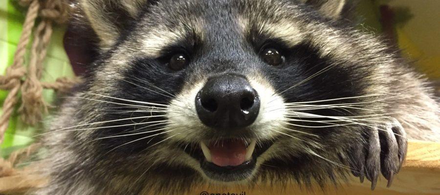 Семь самых необычных домашних животных - фото 8