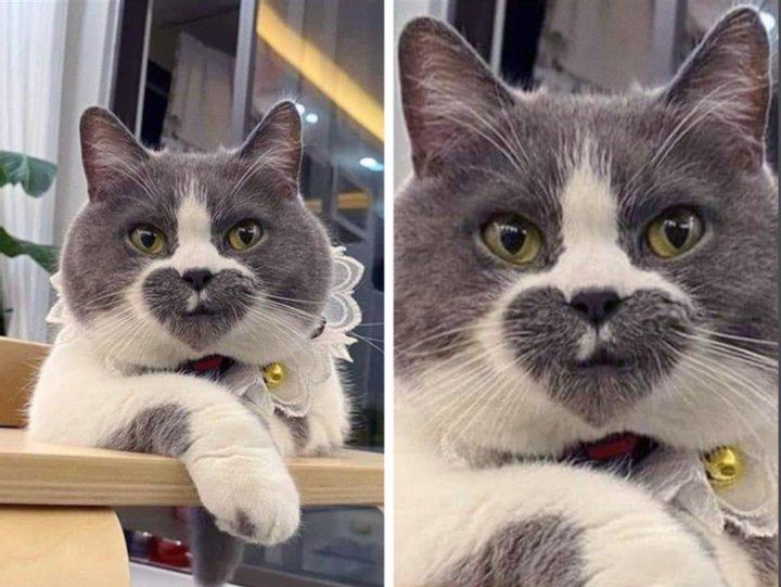 Природа явно прибегла к фотошопу: самые необычные кошки в мире (ФОТО)  - фото 10