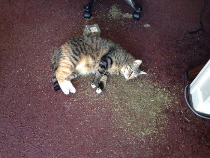 Когда кошки - главные в доме (Позитивные фото) - фото 9