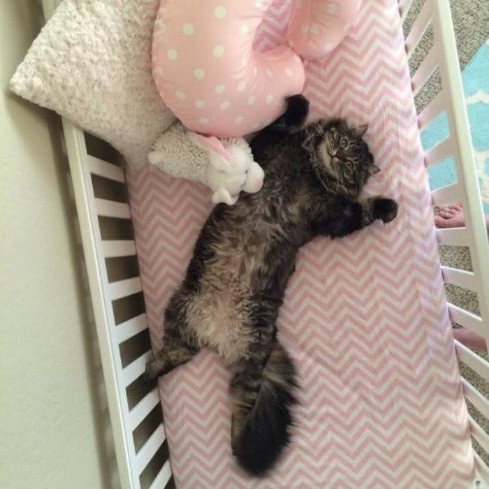 Когда кошки - главные в доме (Позитивные фото) - фото 3