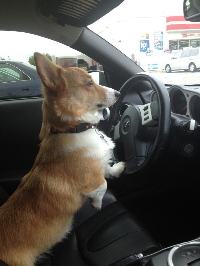 Порция позитива: собаки, которые явно возомнили себя человеком (фото) - фото 9
