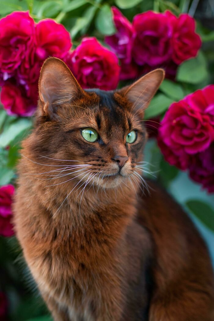 Семнадцать фото кошек, которым впору работать в модельном бизнесе  - фото 10