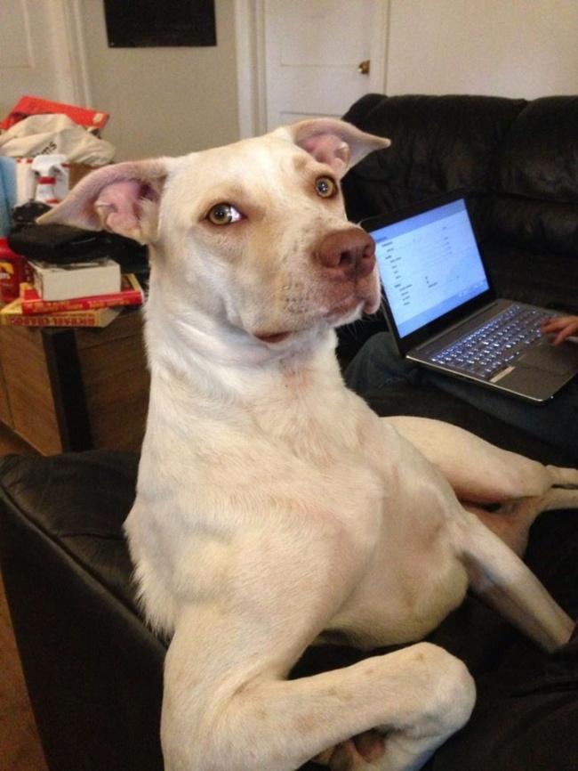 Порция позитива: собаки, которые явно возомнили себя человеком (фото) - фото 8
