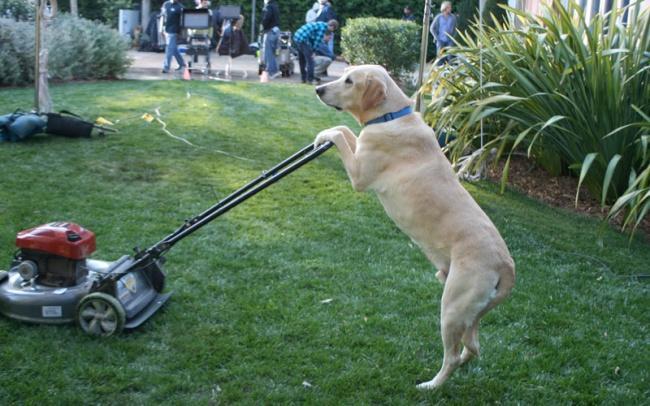 Порция позитива: собаки, которые явно возомнили себя человеком (фото) - фото 10