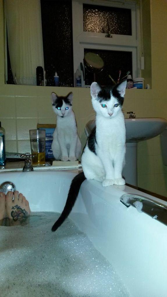 Кішки, які не мають жодного поняття про особистий простір - 17 курйозних фотографій мурлик - фото 6