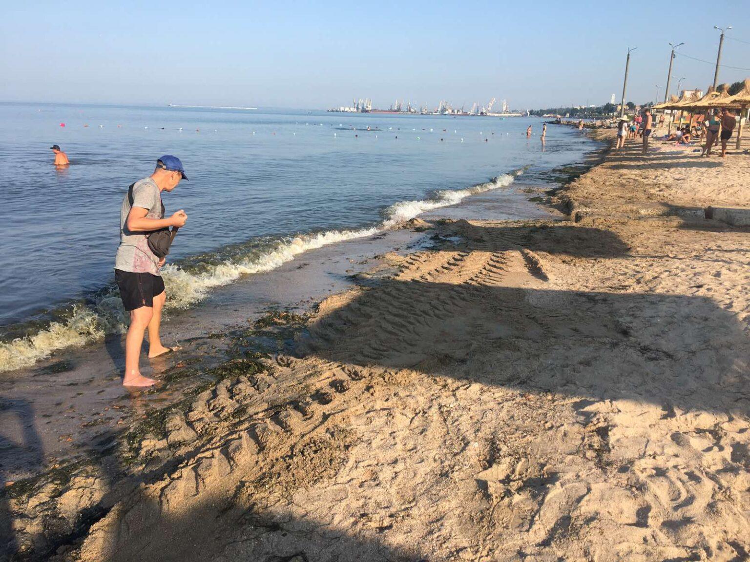 На пляжах в Бердянську виросли гори водоростей - фото 2