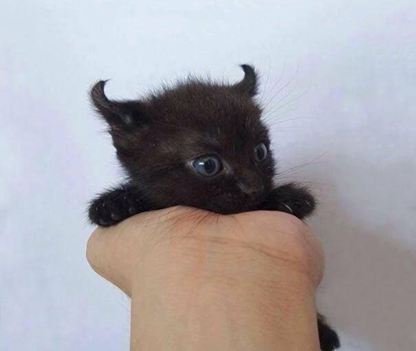 Для підняття настрою в локдаунний вікенд: 17 фото кошенят, мімімішність яких зашкалює - фото 12
