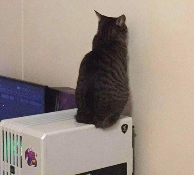 Смешные фото котов, которые точно улучшат настроение - фото 5