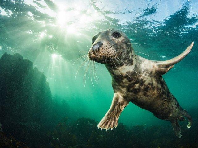 Неповторимый момент: лучшие фотографии природы за последние 10 лет  - фото 2