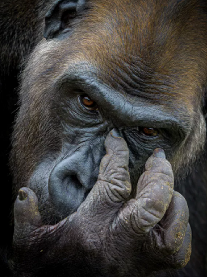 Фотографии дикой природы 2021: кто стал победителем (ФОТО) - фото 4