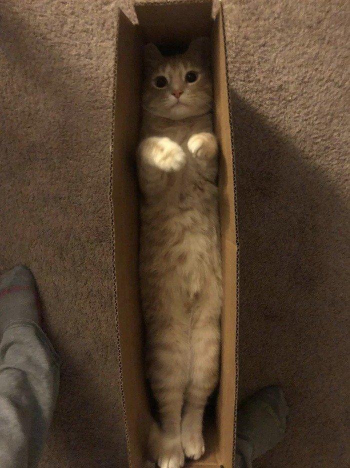 Кішки - це рідини, і цьому є докази - фото 15