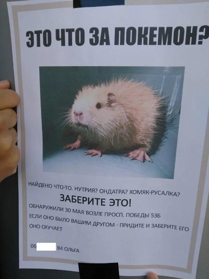 Минутка позитива: объявления о животных, которые заставят вас улыбнуться (ФОТО) - фото 7