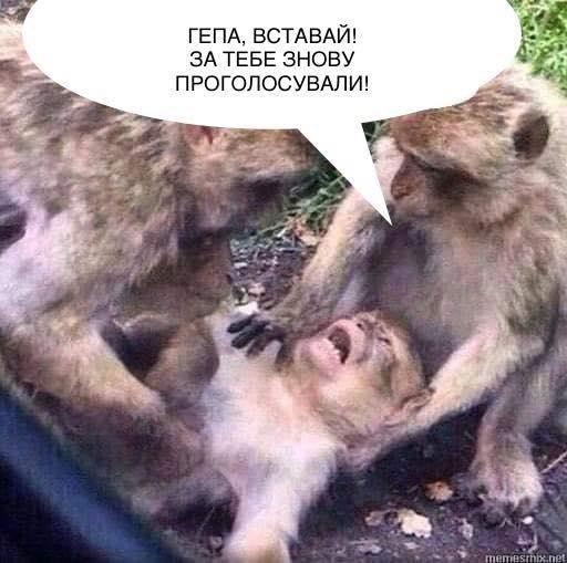 """""""Гена, ты тут?"""": реакции украинцев на выборы в фотожабах - фото 4"""