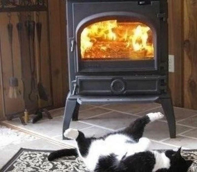 Кошки - правдивые фото, в которых отражена вся суть их натуры  - фото 7