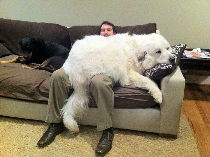 """Впечатляющие фото собак, которые стали """"большими мальчиками"""" - фото 4"""