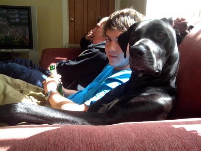 Порция позитива: собаки, которые явно возомнили себя человеком (фото) - фото 11