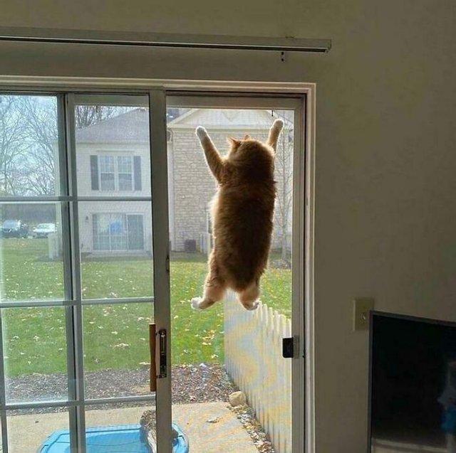 Смешные фото котов, которые точно улучшат настроение - фото 4