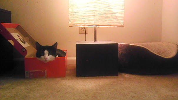 15 фото кошек, которые не оценили подарков от хозяев - фото 13