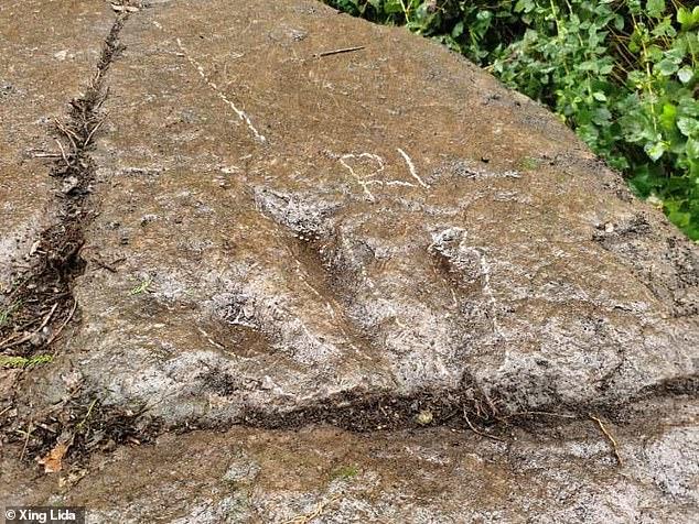 Цінна знахідка: 5-річний хлопчик виявив у селі сліди динозавра - фото 3