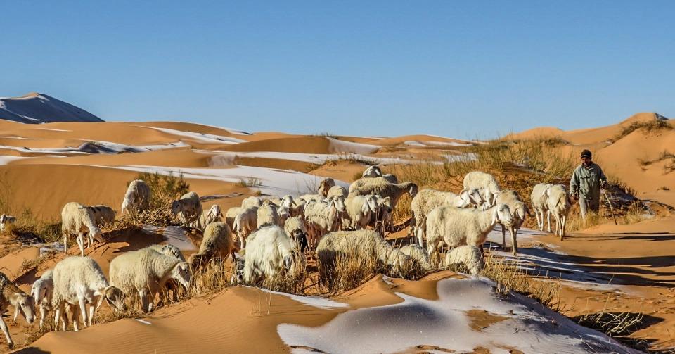 В Сахаре выпал снег — удивительные фото морозной пустыни - фото 8