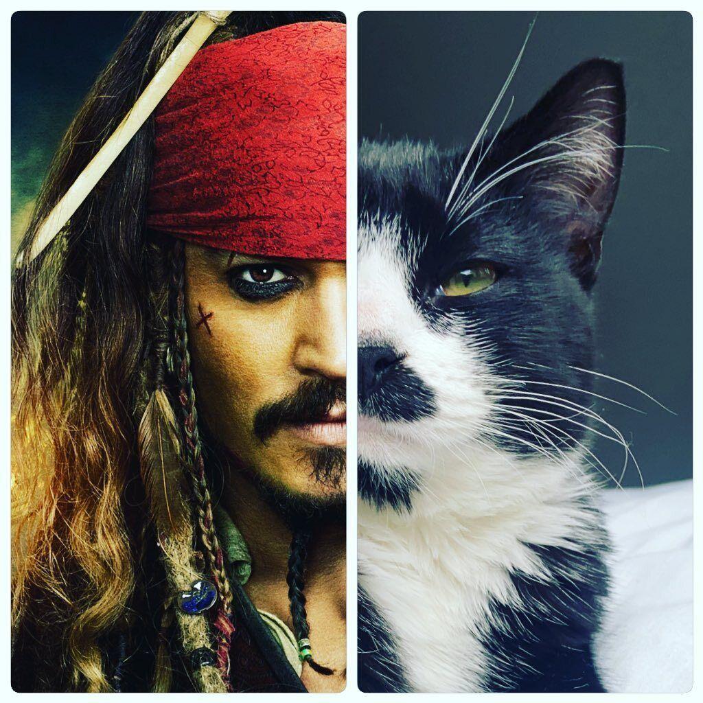 В сети нашли кота, очень похожего на Джека Воробья (Фото) - фото 2