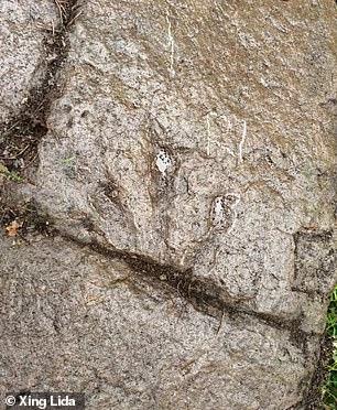 Цінна знахідка: 5-річний хлопчик виявив у селі сліди динозавра - фото 2