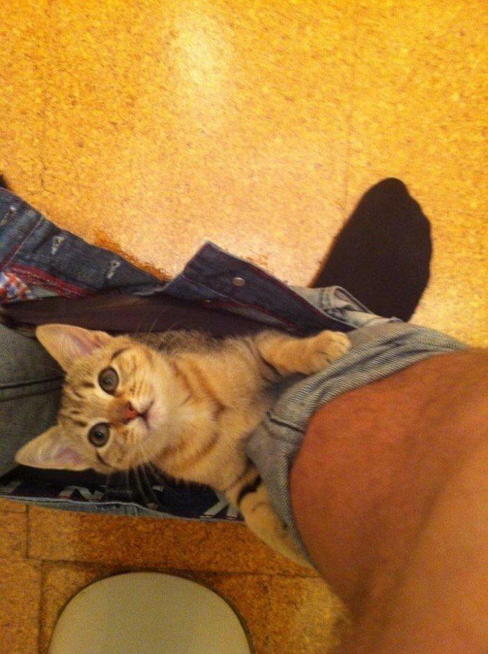 Когда кошки - главные в доме (Позитивные фото) - фото 4